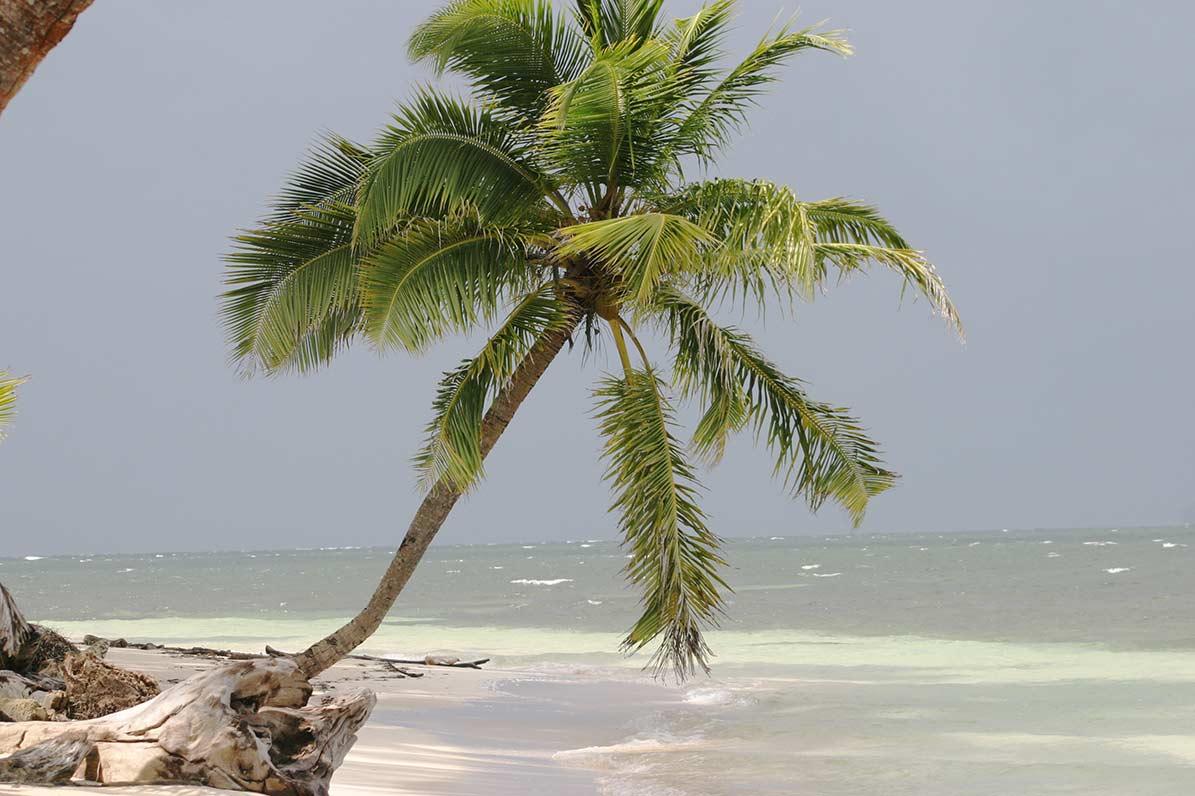 Caribbean Cues in Nicaragua